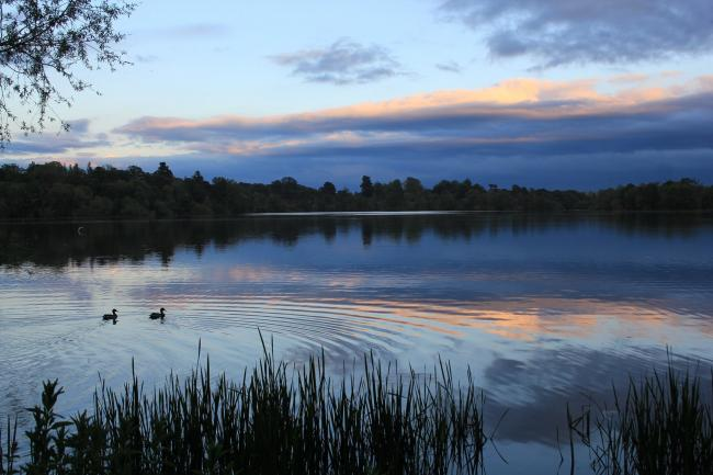 Alison Utting sent this from an evening dog walk around the Mere in Ellesmere
