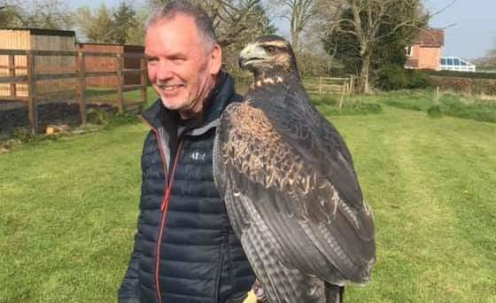 Paco has now been found. Picture by Shropshire Falconry