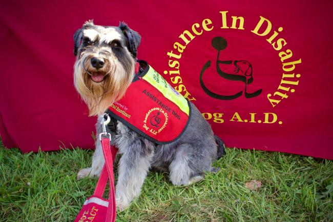 Shrewsbury-based charity Dog A.I.D. is one of the five good causes that will receive proceeds from the show