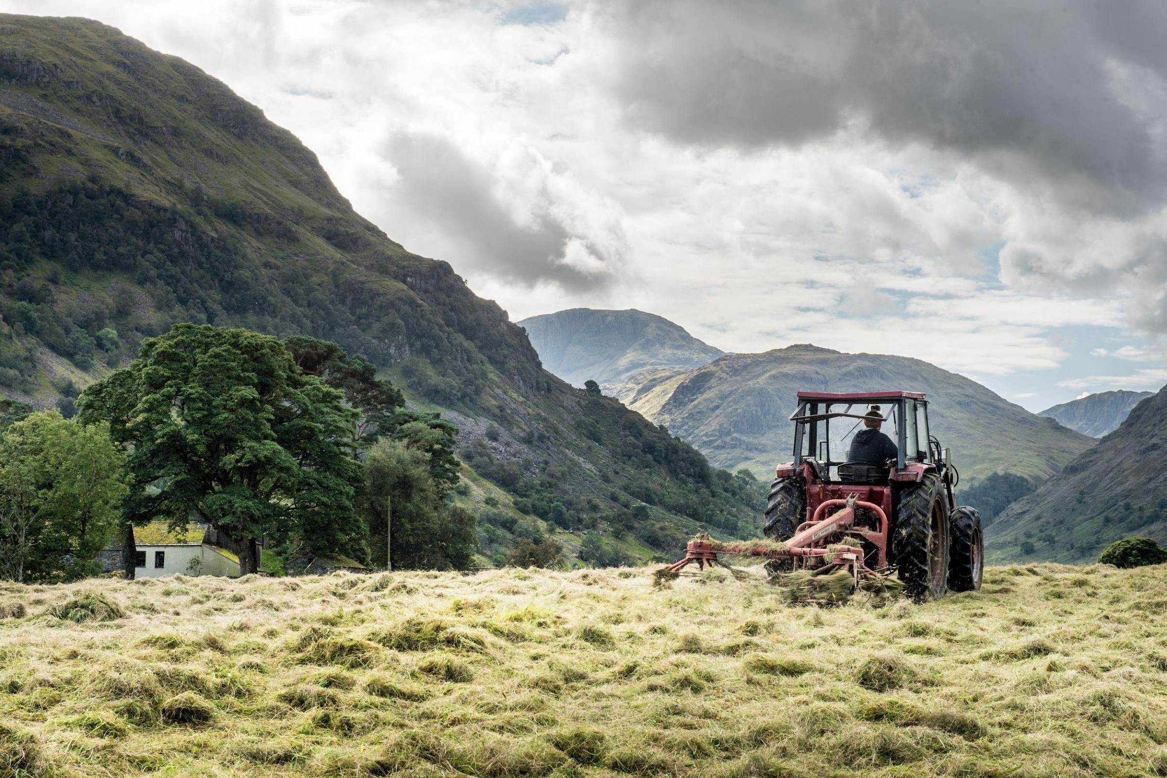 Haymaking in Borrowdale, Cumbria.