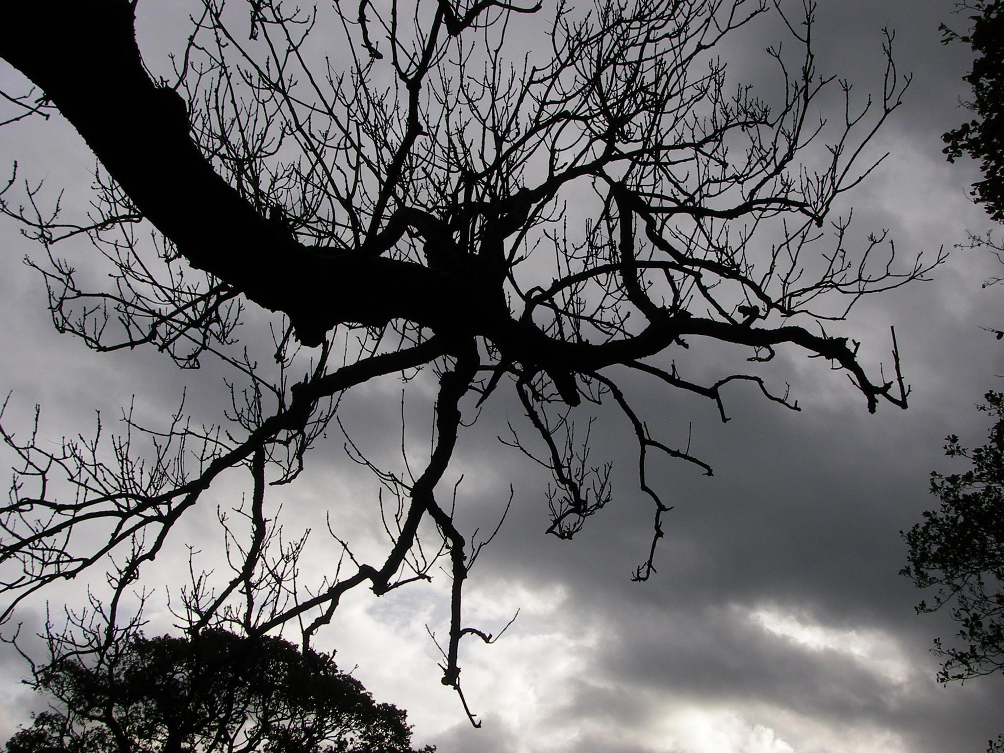 CAMERA CLUB:  Spooky Tree under darks clouds on the shores of Bassenthwaite. SUBMITTED. Liz Pennington. 5 November 2018.